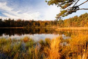 The Pond at Caumsett in the Fall